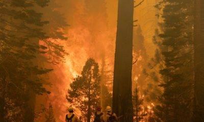 Kaliforniya yangınları