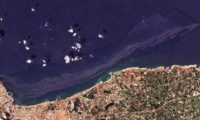 Suriye WWF Türkiye petrol sızıntısı