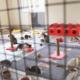 Beşiktaş Belediyesi engelli kedi yuva barınak
